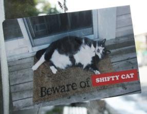 Shifty Cat sticker