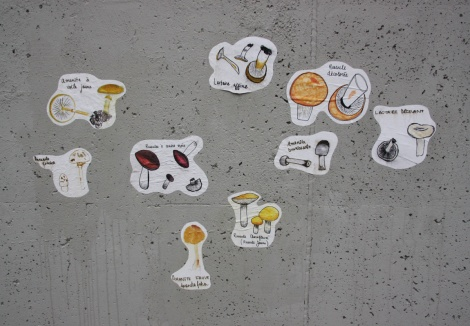 small paste-ups of mushroooms by unidentified artist